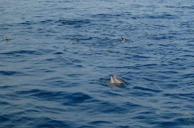 Dolphin1032