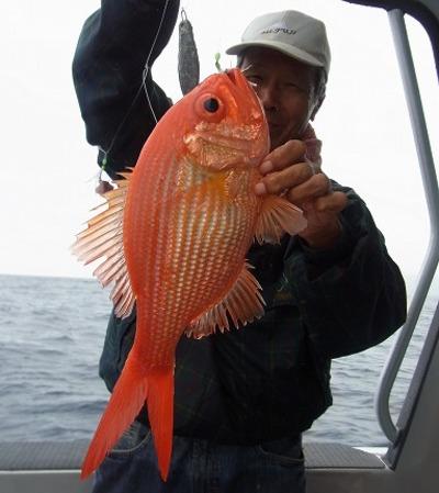 Nzredfish