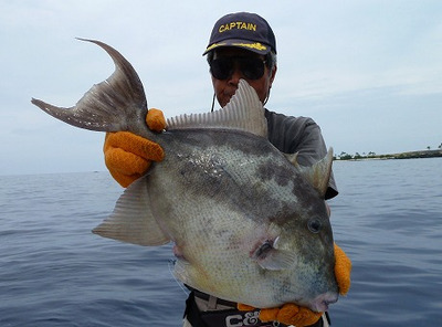 Finescale_triggerfish_balistes_poly